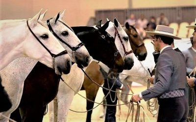 SICAB on Pre-hevosten vuosittainen suurtapahtuma Sevillassa, johon kannattaa ehdottomasti tutustua